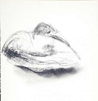 francine-kooij-houtskool-tekeningen-artis-dieren-01