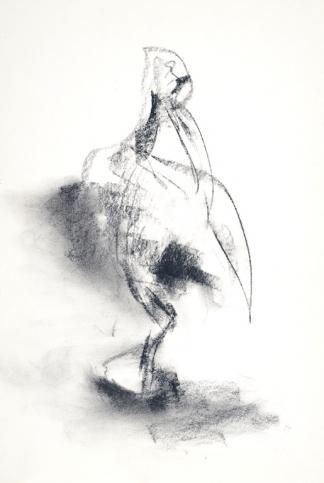 francine-kooij-houtskool-tekeningen-artis-dieren-02