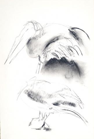 francine-kooij-houtskool-tekeningen-artis-dieren-07