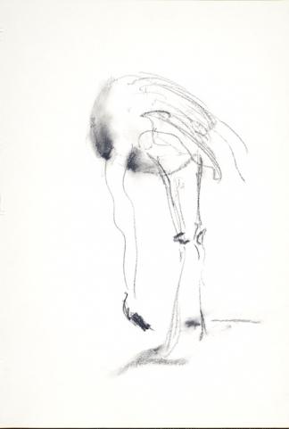 francine-kooij-houtskool-tekeningen-artis-dieren-08