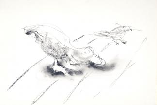 francine-kooij-houtskool-tekeningen-artis-dieren-11