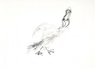 francine-kooij-houtskool-tekeningen-artis-dieren-13