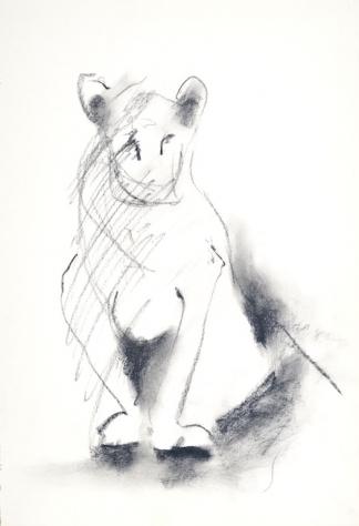 francine-kooij-houtskool-tekeningen-artis-dieren-15