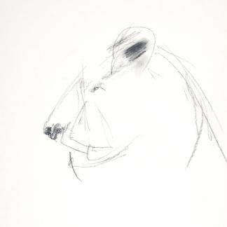 francine-kooij-houtskool-tekeningen-artis-dieren-16