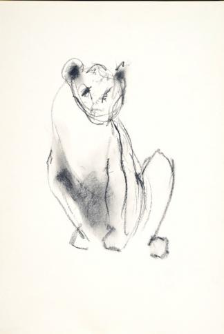 francine-kooij-houtskool-tekeningen-artis-dieren-17