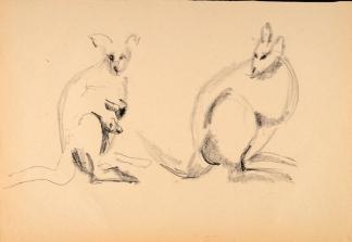 francine-kooij-houtskool-tekeningen-artis-dieren-18