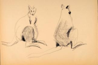 francine-kooij-houtskool-tekeningen-artis-dieren-19