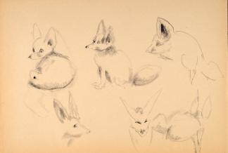 francine-kooij-houtskool-tekeningen-artis-dieren-20