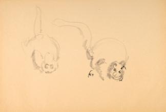 francine-kooij-houtskool-tekeningen-artis-dieren-22