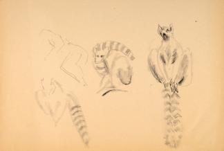 francine-kooij-houtskool-tekeningen-artis-dieren-23