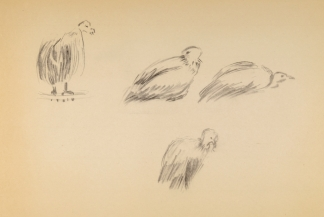 francine-kooij-houtskool-tekeningen-artis-dieren-24