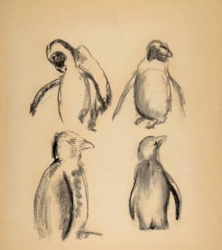 francine-kooij-houtskool-tekeningen-artis-dieren-25