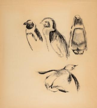 francine-kooij-houtskool-tekeningen-artis-dieren-26