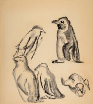 francine-kooij-houtskool-tekeningen-artis-dieren-27