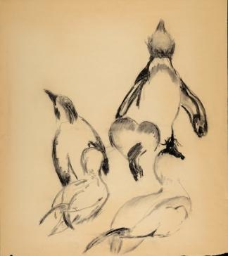 francine-kooij-houtskool-tekeningen-artis-dieren-28