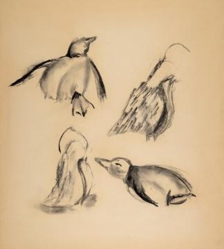 francine-kooij-houtskool-tekeningen-artis-dieren-29