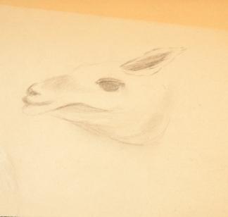 francine-kooij-houtskool-tekeningen-artis-dieren-30