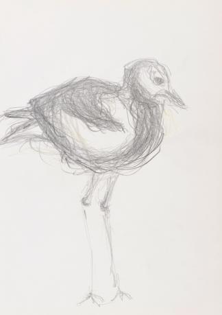 francine-kooij-potlood-tekeningen-artis-04