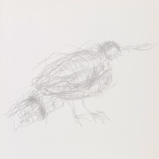 francine-kooij-potlood-tekeningen-artis-08