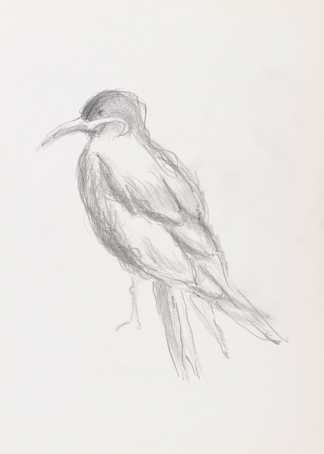 francine-kooij-potlood-tekeningen-artis-11