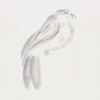 francine-kooij-potlood-tekeningen-artis-13