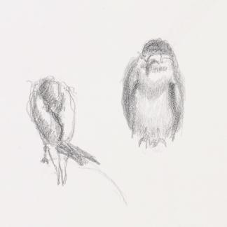 francine-kooij-potlood-tekeningen-artis-15