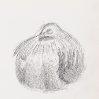 francine-kooij-potlood-tekeningen-artis-16